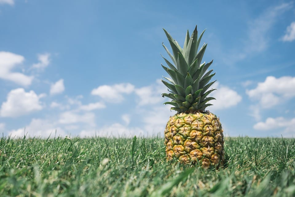 5 Best Pineapple Corers for Your Kitchen