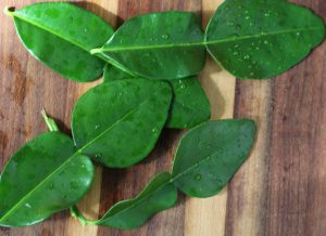 What To Replace Kaffir Lime Leaves With