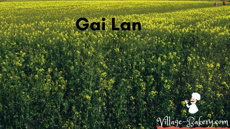 Gai Lan